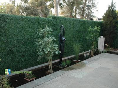 Designer Plants Boxwood Hedge