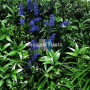 Fire safe vertical garden green wall