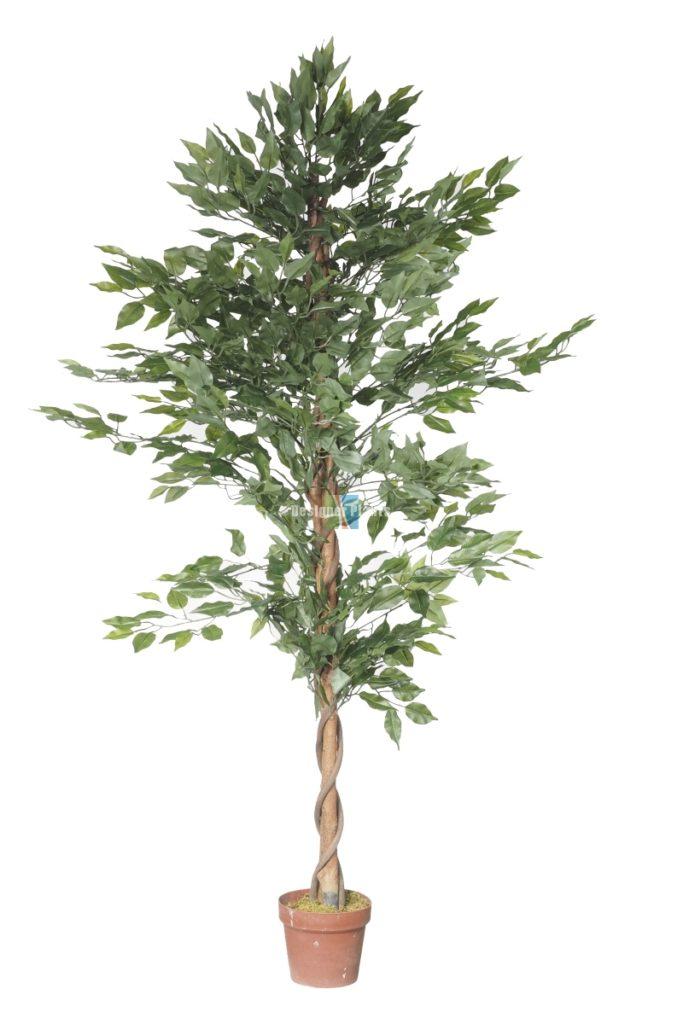 Fake ficus tree