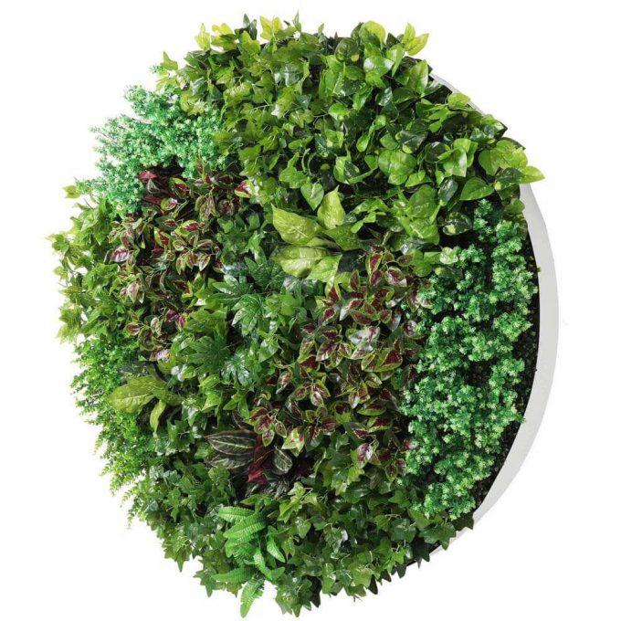 artificial green wall white frame disc