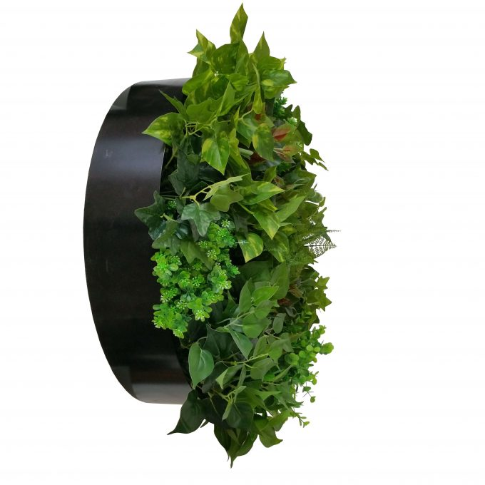 Green Wall with a black metal frame
