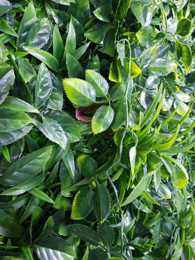 Quality green wall with a variety of green wall plants