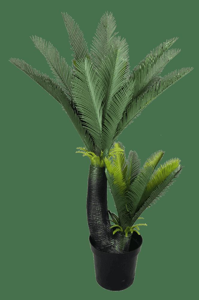 Multi Trunk Sago Cycad 130cm Designer Plants