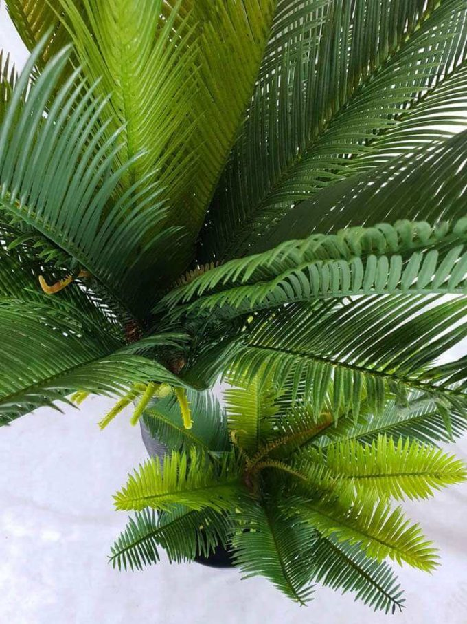 Artificial two headed cycas (cycad) tree