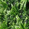 LAVANDULA VERTICAL GARDEN / GREEN WALL UV RESISTANT PREMIUM SAMPLE