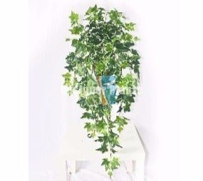 Mixed White Ivy Bush 100cm