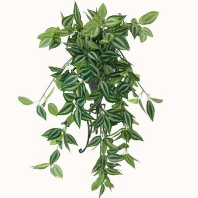 mixed hanging plant