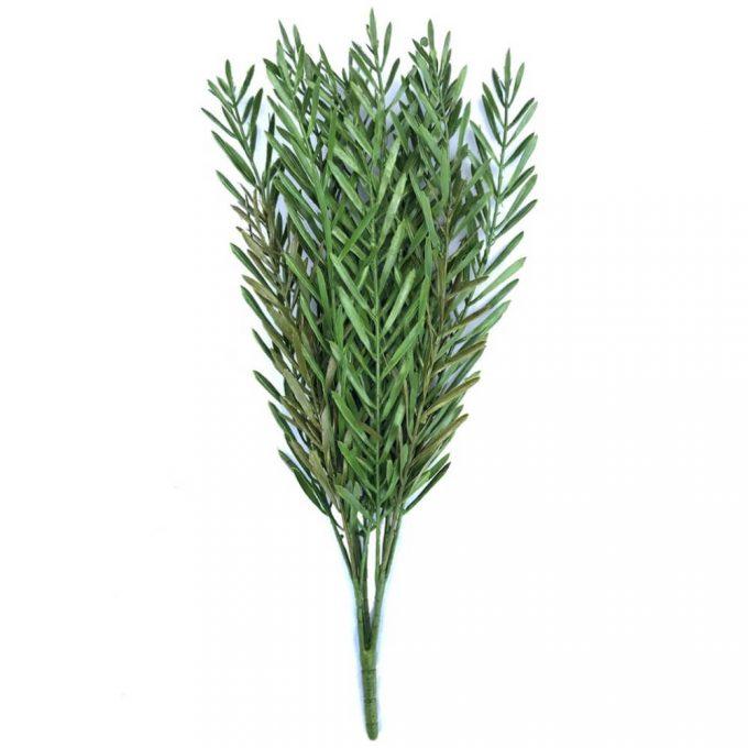 Native Tea Tree Stem