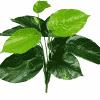 lily stem