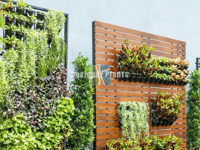 Vertical Garden Diy Plants Designer Plants