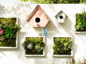 Vertical wall garden for home