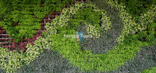 Top wall garden designs and secrets
