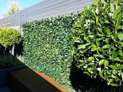5. Laurel Hedge Trellis by Designer Plants