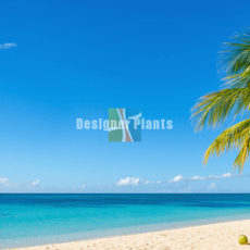 How to create a tropical look in any season with palm trees?