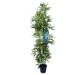 Fake black bamboo 180cm