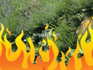 fire safe green walls