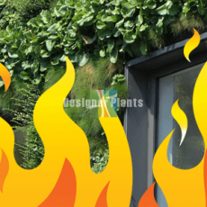 How fire safe are green walls?