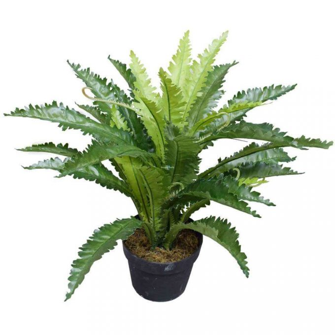 Birds Nest Fern Artificial 55cm