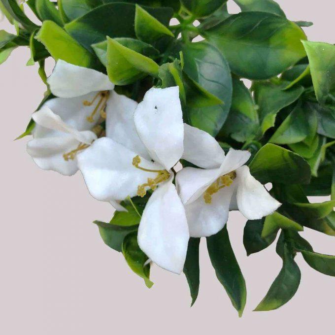 Flowering Jasmine Plant Stem