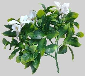 White Oasis Green Wall Stem