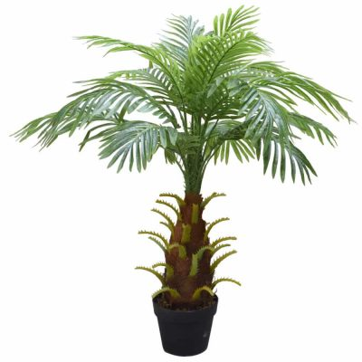 small potted large base palm tree