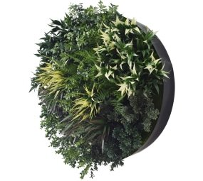 80cm dark green wall plant disc