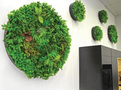What is a green wall - green wall discs - green wall disks