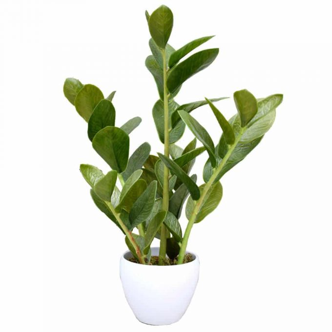 artificial small potted zanzibar plant