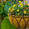 Hanging plants - hanging basket plant with flowers