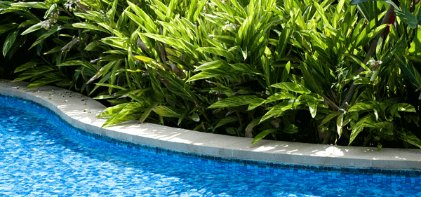 Plants for your poolside: Poolside plants
