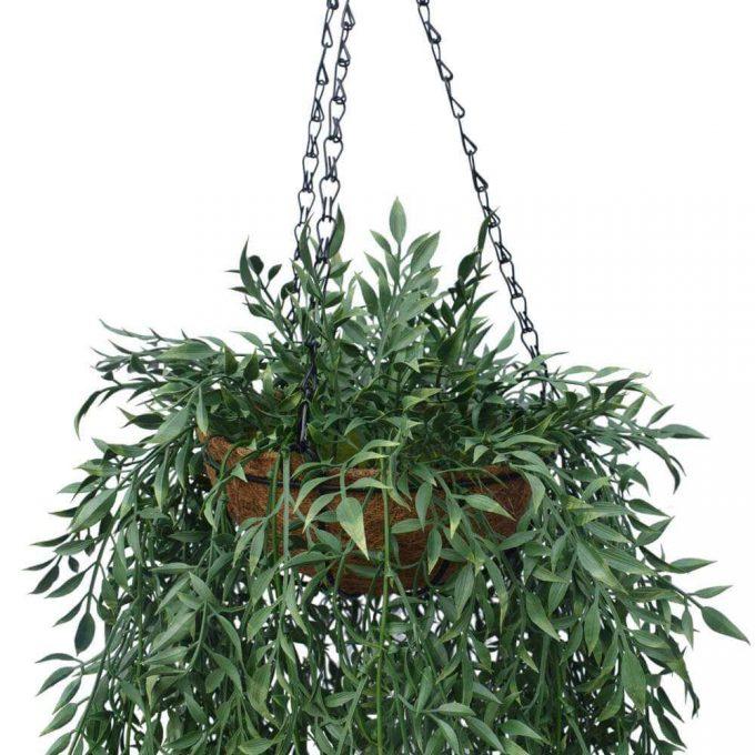 Fern Hanging Basket Details