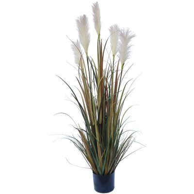 Flowering Native Fox Tail Grass