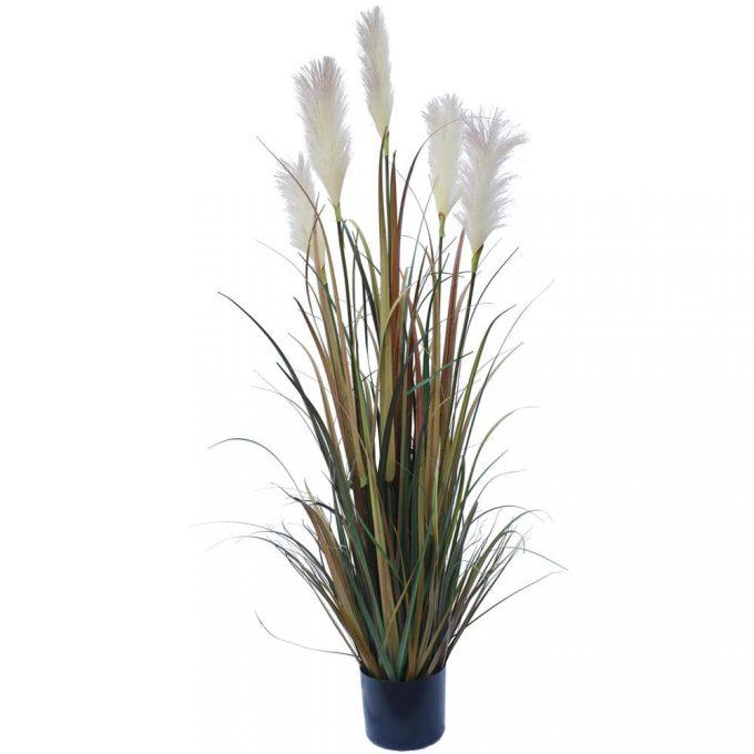 Flowering Native Fox Tail Grass