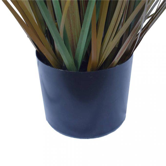 Flowering Native Fox Tail Grass - Pot