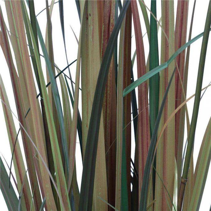 Flowering Native Fox Tail Grass - Leaf