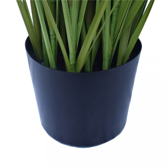 Spear Grass Plant - Pot