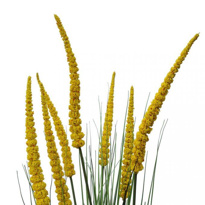 Spear Grass Plant Details (2)