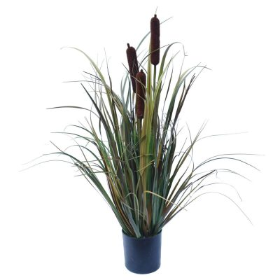 Brown Grass Plant