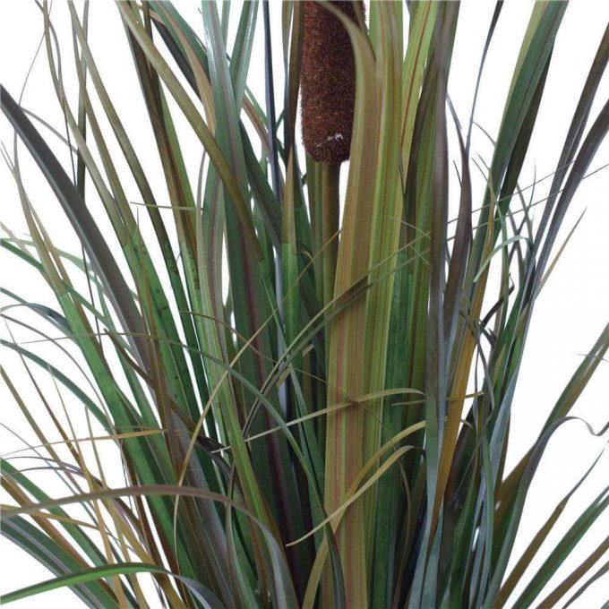 Brown Grass Plant Details (1)