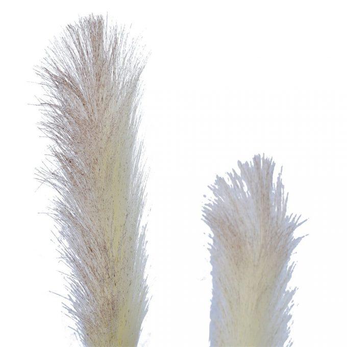 Flowering Native Fox Tail Grass - Flower