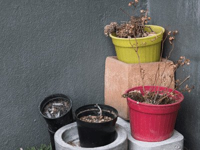 Christmas gift ideas for those who kill plants - dead plants in pots in corner