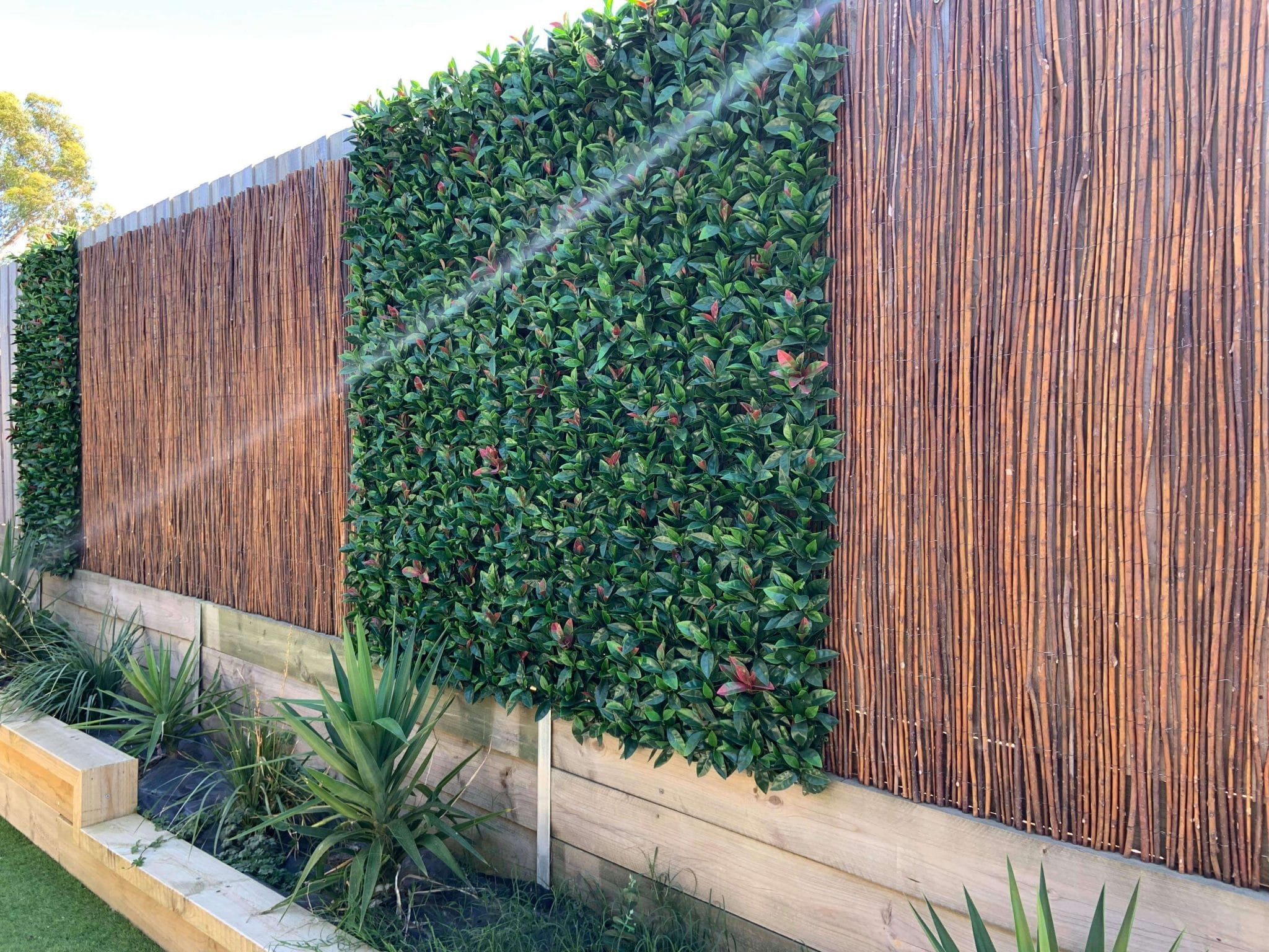 Artificial hedge screening - photinia along a back timber fence