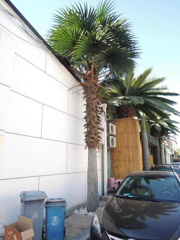 Artificial fan palm leaves and tree