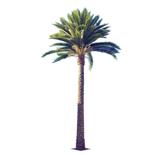 Queensland (Middle Eastern) Artificial Palm Tree