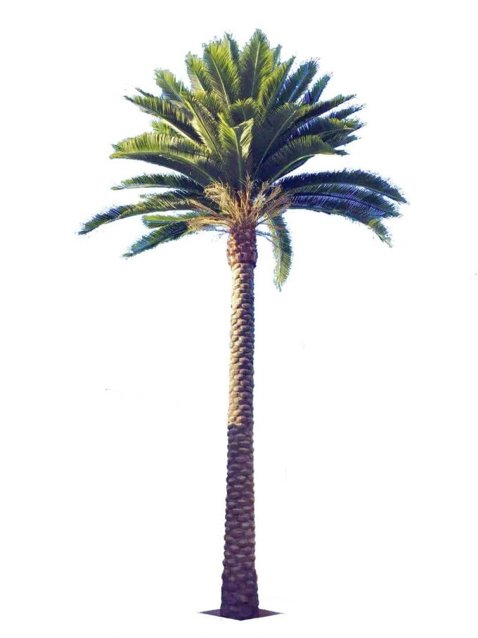 artificial middle east date palm