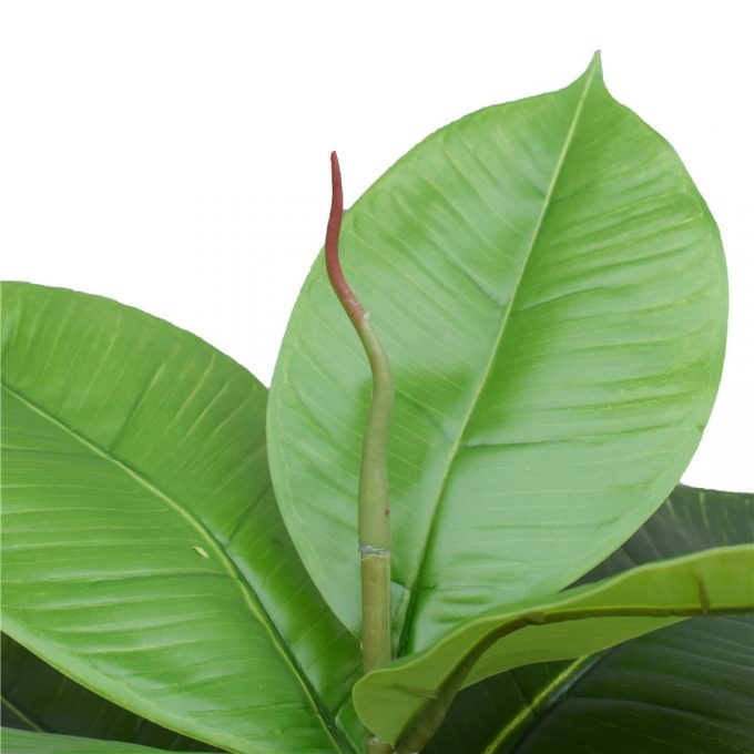 Artificial Potted Rubber Plant Detials