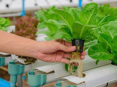 Vegetable vertical garden - vertical garden maintenance