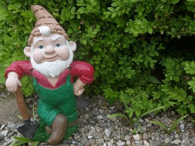 Garden knome in pebbles surrounded by a green boxed hedge - boxwood green hedge and shrub