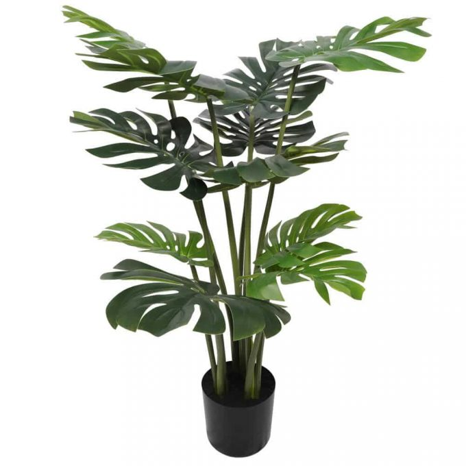 Split Philodendron (Split Leaf)