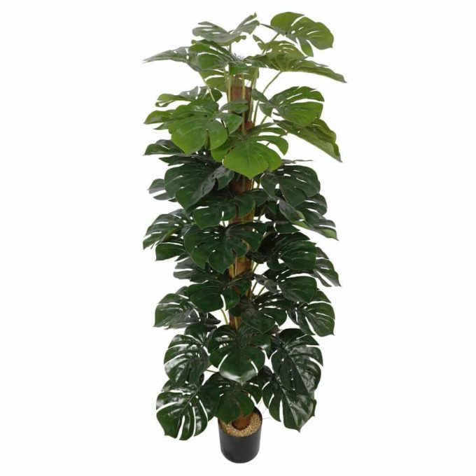 Artificial Money Plant (Monstera)